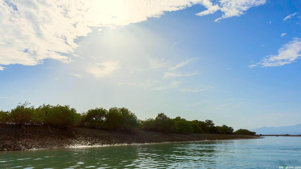 Hara jungle II
